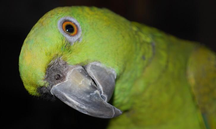 Birds , 6 Beautiful Parrot Lifespan : Parrot Rico