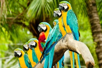 Parrots , 7 Cool Macaw Facts For Kids In Birds Category