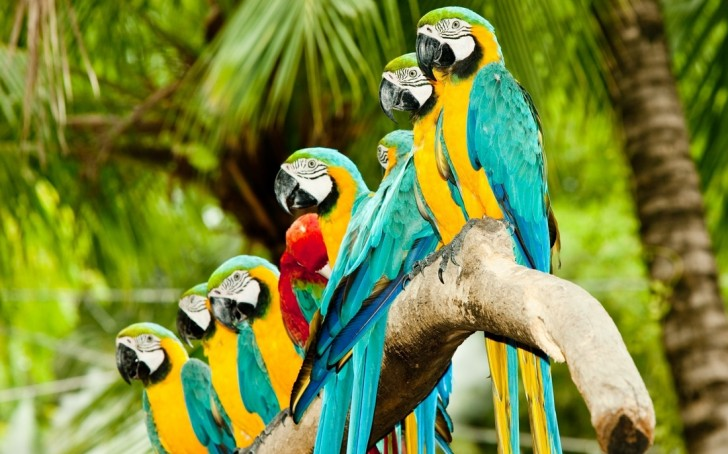 Birds , 7 Cool Macaw Facts For Kids : Parrots