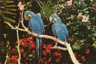 Parrots Jungle , 7 Beautiful Parrot Jungle Miami In Birds Category