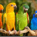 Parrots Macaw , 8 Wonderful Types Of Macaws In Birds Category
