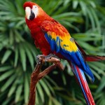 Parrots , 6 Beautiful Parrot Lifespan In Birds Category