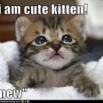 Recaption See cat , 8 Cute Cat Pictures With Captions In Cat Category