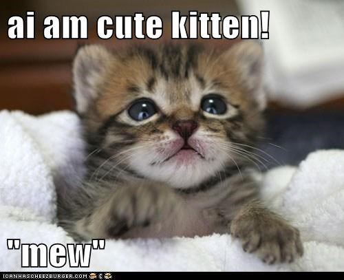 Recaption See Cat : 8 Cute Cat Pictures With Captions ...