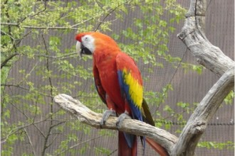 Red McCaw Parrot , 7 Top Mccaw Parrot In Birds Category