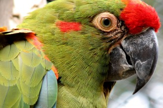 Red fronted Macaw in Dog