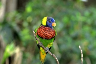 Ringneck Parrot Life Span , 6 Beautiful Parrot Lifespan In Birds Category