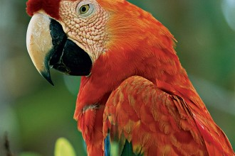 Scarlet Macaw pics in Spider