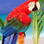Scarlet Macaw wallpaper , 7 Popular Scarlet Macaw In Birds Category