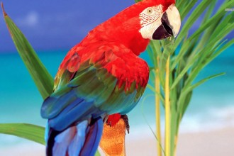 Scarlet Macaw wallpaper in Dog
