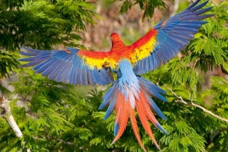 Scarlet Macaw in Plants