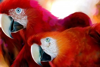 Scarlet Macaws Wallpaper , 7 Gorgeous Scarlet Macaws In Birds Category