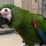 Severe , 8 Fabulous Severe Macaw In Birds Category