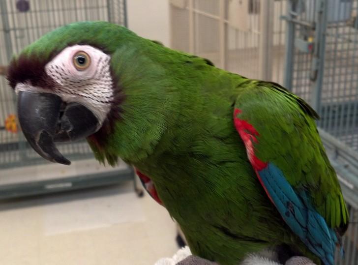 Birds , 8 Fabulous Severe Macaw : Severe