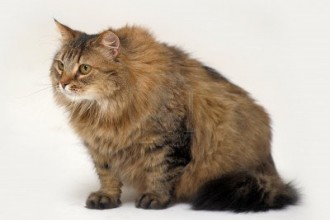 Siberian Cat Pictures in Plants