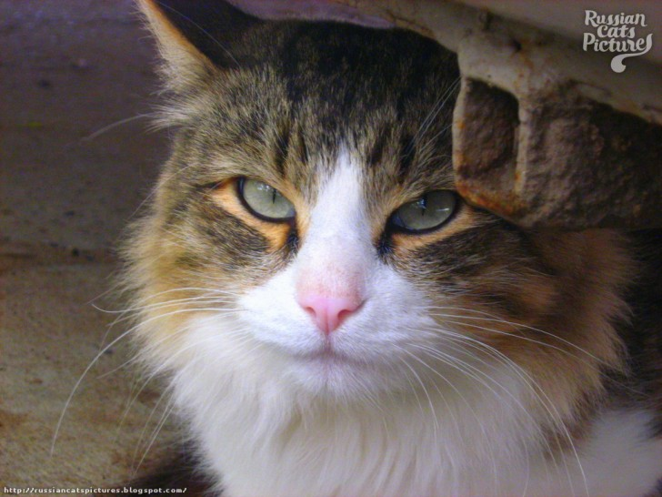 Cat , 6 Wonderful Tabby Cat Pictures : Sniffy Tabby Cat