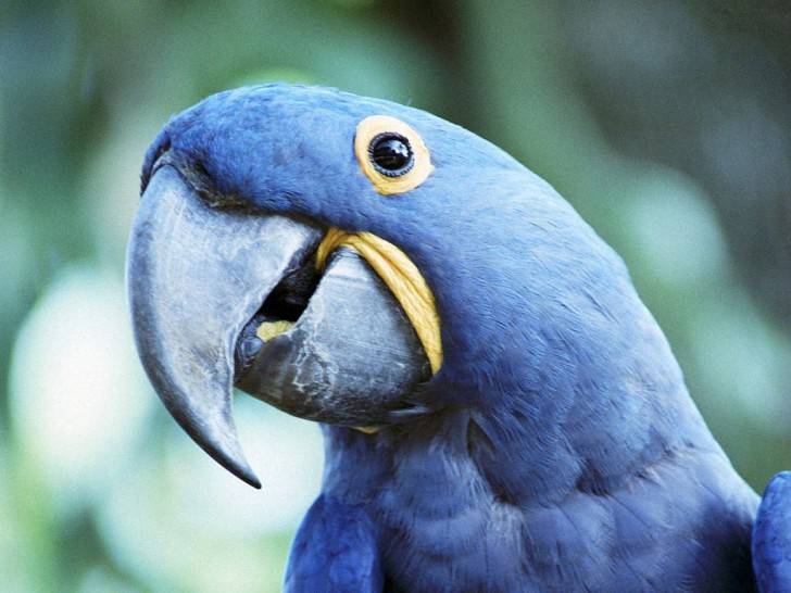 Birds , 7 Cool Macaw Facts For Kids : Speaking Parrot