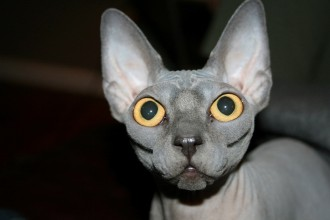 Sphynx Cat Pictures in Plants