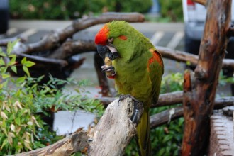 Telford Bird Breeders , 8 Unique Macaw Breeders In Birds Category