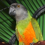 The Bird Nerds , 8 Cool Macaw Rescue In Birds Category