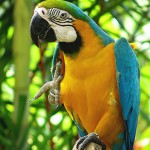 The Blue Macaw , 8 Wonderful Types Of Macaws In Birds Category