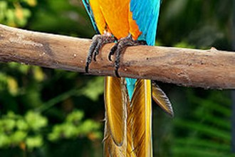 The Blue And Yellow Macaw , 7 Cool Pictures Of Macaws In Birds Category