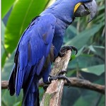 The Parrot Cage , 7 Nice Parrot Cage Hyacinth Macaw In Birds Category