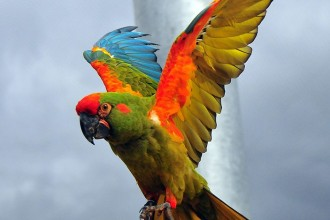 The red fronted macaw in Plants