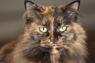 Tortoiseshell Cat in Spider