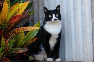 Tuxedo cats in Invertebrates