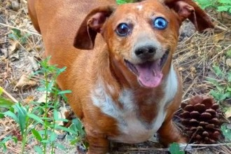 Weiner Dogs , 8 Fabulous Funny Weiner Dog Pictures In Dog Category