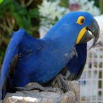 adult macaw  , 8 Cool Macaw Rescue In Birds Category