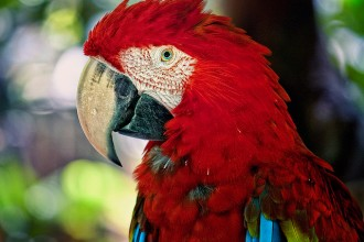 Amazon Parrot , 7 Beautiful Green Winged Macaw In Birds Category