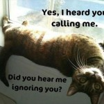 animals funny photo , 6 Best Hilarious Cat Pictures With Captions In Cat Category