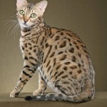bengal cat domestic , 7 Nice Bengal Cats Pictures In Cat Category