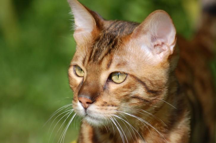 best horizontal cat scratcher