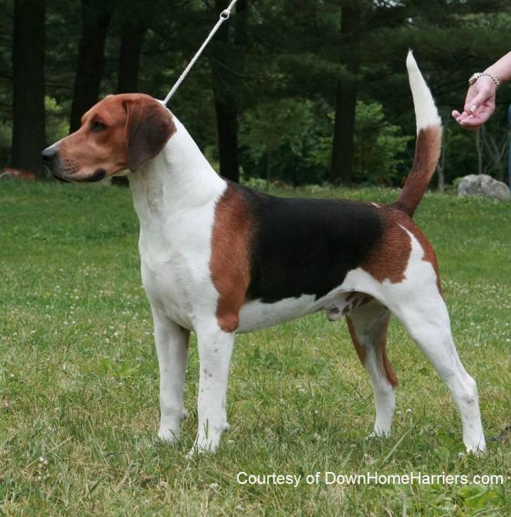 Dog , 6 Gorgeous Big Dog Breeds List And Pictures : Big Dog List
