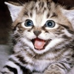 black cat pictures , 6 Cute Funny Pictures Of Cats And Kittens In Cat Category