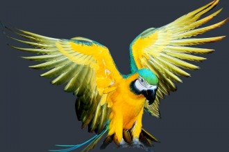 blue and gold macaw in pisces