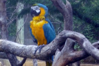blue and gold macaw in Spider