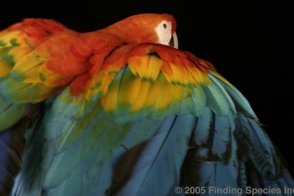 Blue And Gold Macaw , 7 Popular Scarlet Macaw In Birds Category