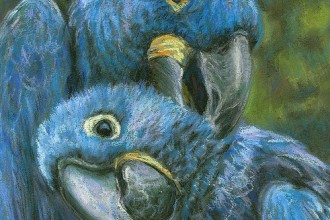 blue hyacinth macaw in Dog