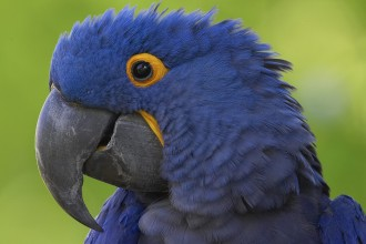 blue macaw bird in Dog