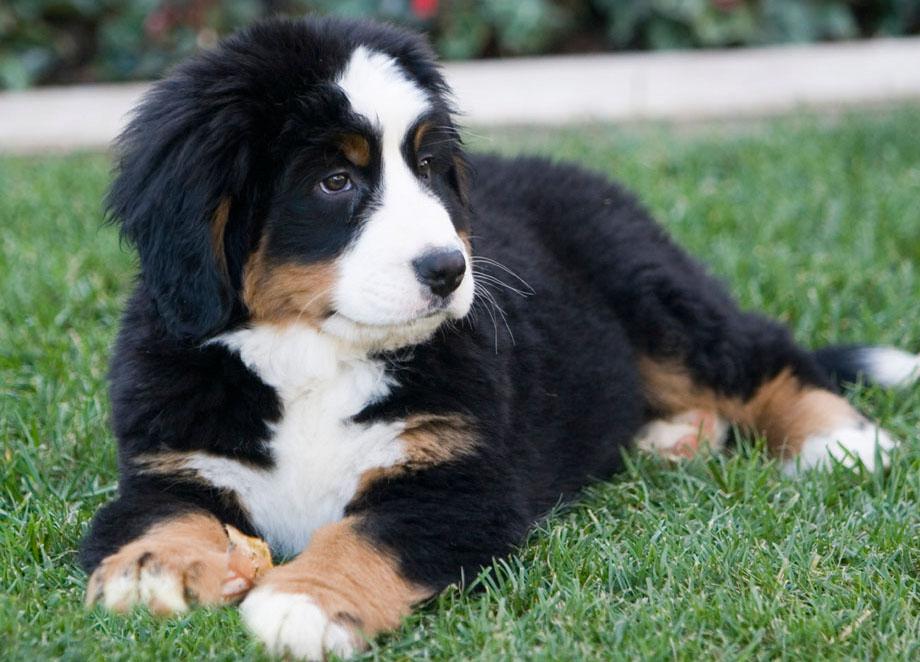 breeders dog