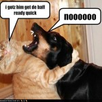 cat and dog funny  , 5 Nice Funny Cat And Dog Pictures With Captions In Cat Category