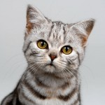 cat breeds , 8 Cute Cat Breeds Pictures In Cat Category