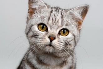 cat breeds in Bug