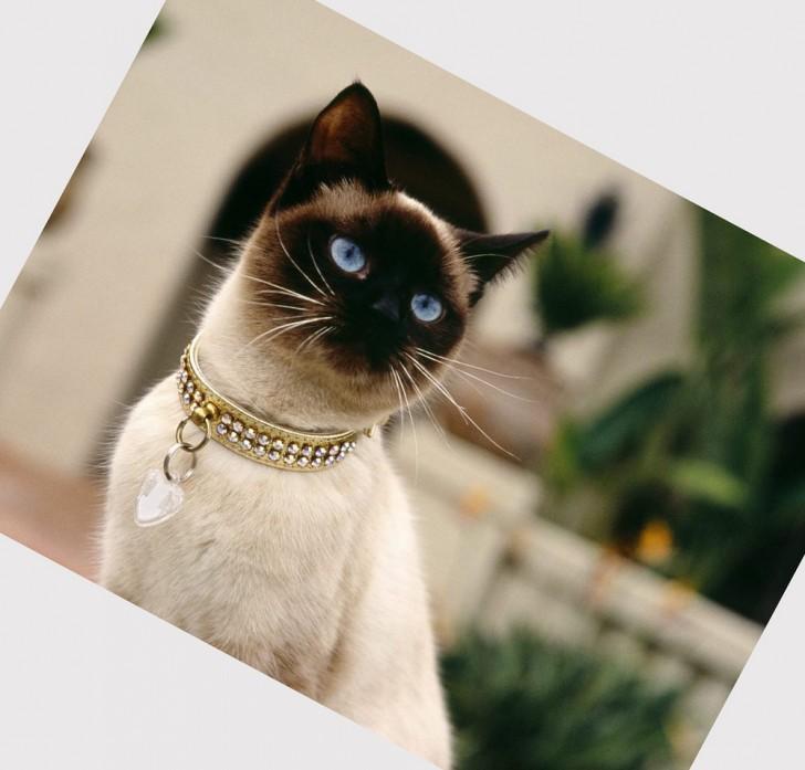 Cat , 6 Fabulous Pictures Of Cat Breeds : Cat Breeds