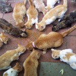 cats , 5 Excellent Herding Cats Picture In Cat Category