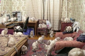 Cats Picture , 5 Excellent Herding Cats Picture In Cat Category